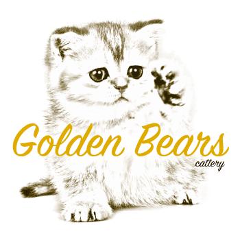 Golden Bears Cattery